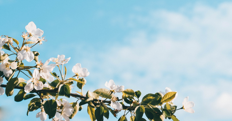 spring floral against a blue sky